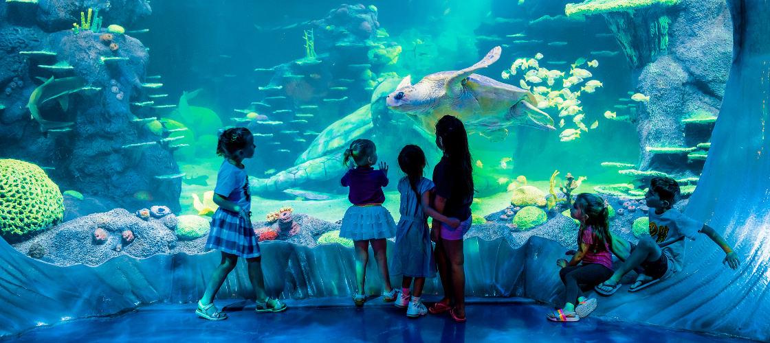 SEA LIFE Sydney Aquarium Admission