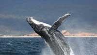 Merimbula Whale Watching Cruise