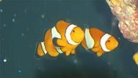 Merimbula Aquarium