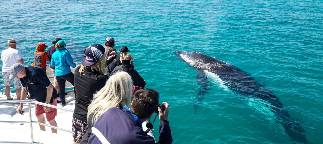 Whale Watch Cruise including Lunch