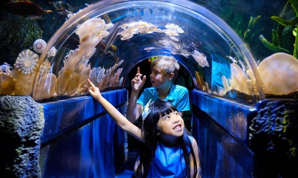 SEA LIFE Melbourne Aquarium Entry Tickets