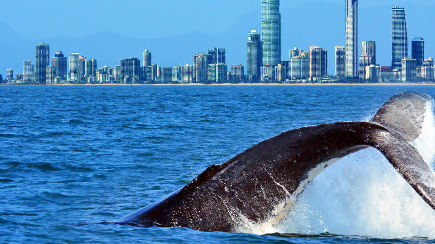 Whale Watch Cruise with FREE SkyPoint Observation Deck Entry