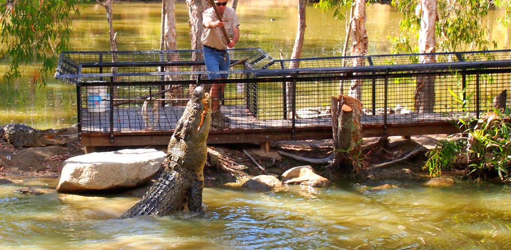 Hartleys Crocodile Adventures Entry Tickets