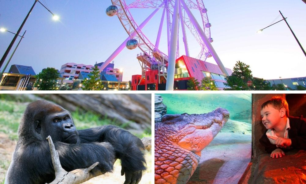 Melbourne Zoo, Aquarium & Melbourne Star Pass