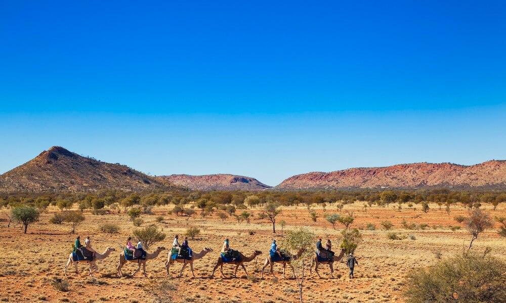 Alice Springs Noon Camel Ride