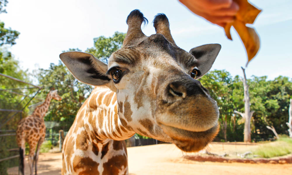Swan River Scenic Cruise and Perth Zoo Entry Ticket Package