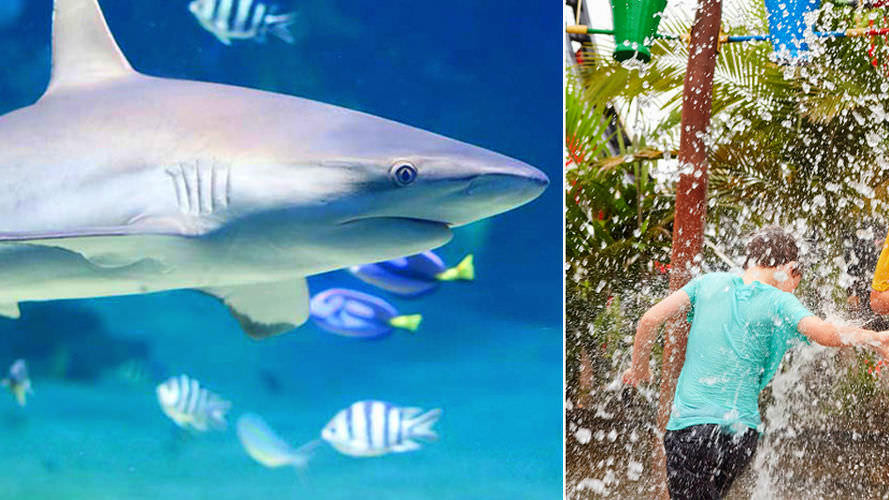 Discounted Pass including SEA LIFE Sunshine Coast and Aussie World