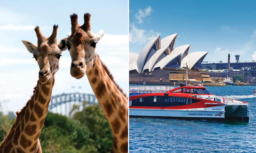 Taronga Zoo & Ferry Pass with Sky Safari