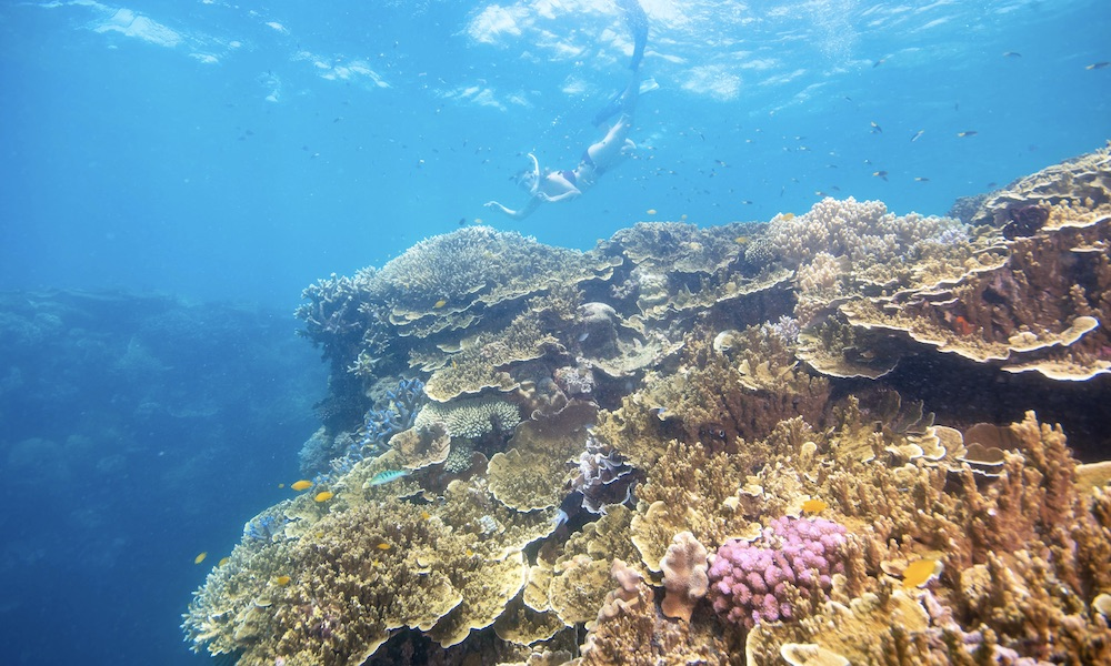 Great Barrier Reef Cruise to Sunlover Reef Cruises Pontoon