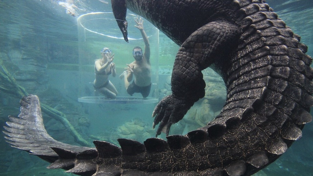 Cairns City Attraction Pass