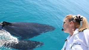 Brisbane Whale Watching Cruise