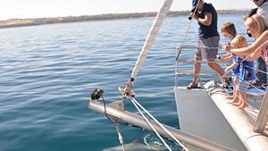 Dolphin Watching Cruise - Glenelg, South Australia