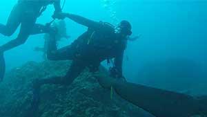 Ocean Dive with Sharks, Sunshine Coast