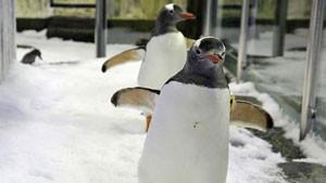 SEA LIFE Melbourne Aquarium ? Penguin Passport