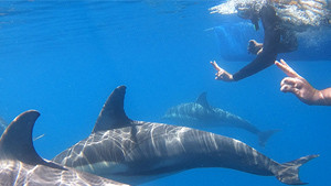 Swim With Dolphins - Glenelg, South Australia