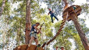 Tree Top Adventure Park Experience - Central Coast