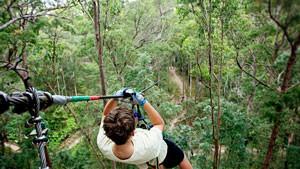 Flying Fox High Ropes Adventure Park - Tamborine Mountain, Gold Coast