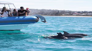 Seal Island Tour - Victor Harbor