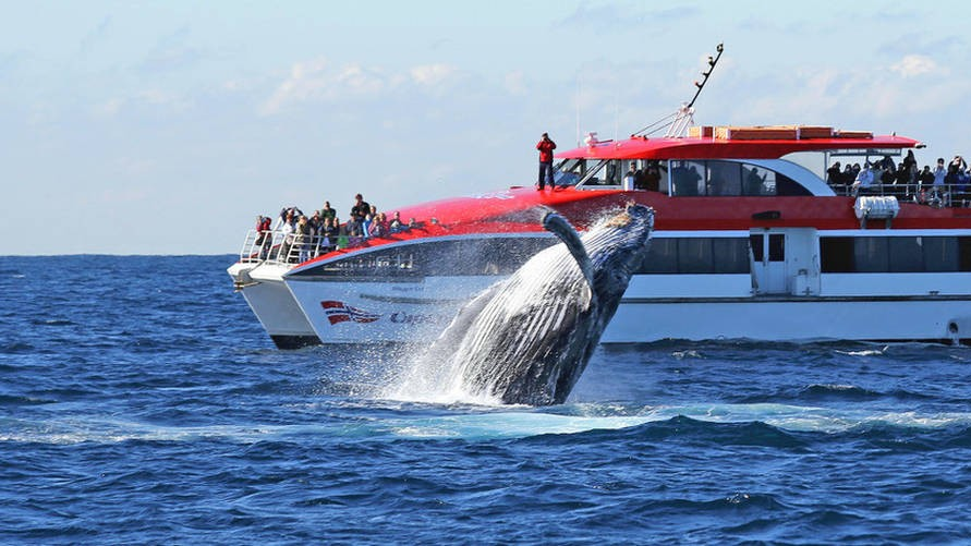 Captain Cook Whale Watching Tours
